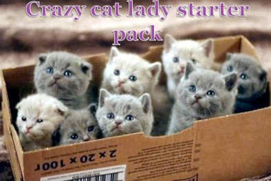 Crazy-Cat-Lady-Starter-Pack1